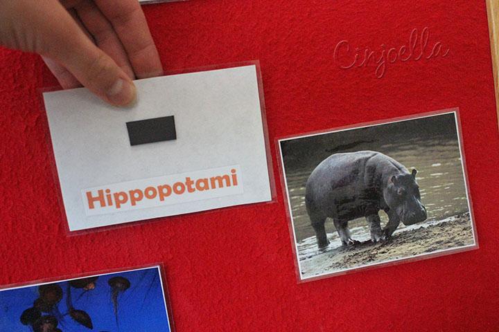 hippopotami text