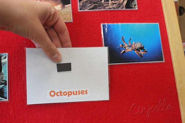 octopuses text
