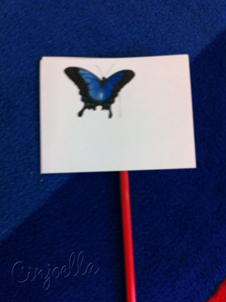 blury butterfly paper on a straw