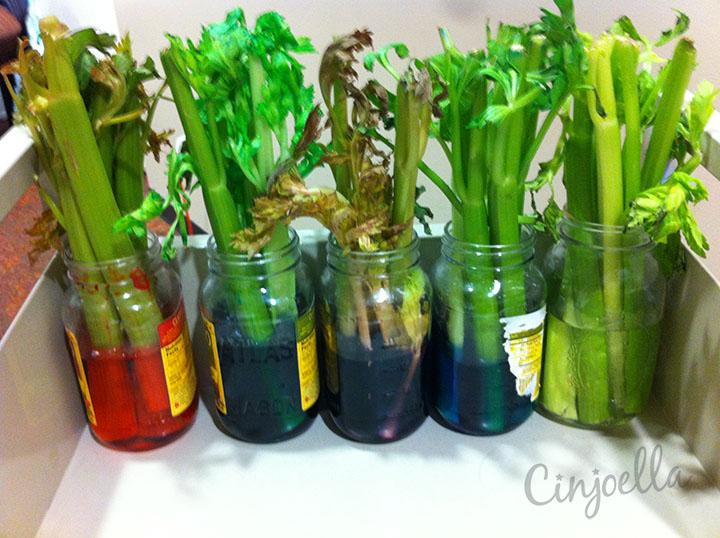 rainbow of celery